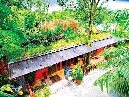 Trồng cây để chống nóng mái tôn