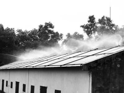 Dùng hệ thống máy phun sương chống nóng
